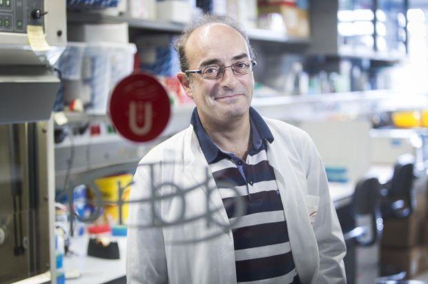 El biólogo evolutivo Carles Lalueza-Fox, en su laboratorio de Barcelona. Massimiliano Minocri