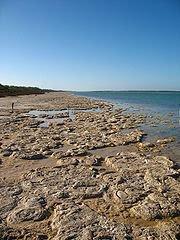 estromatolitos intermareal plana corriente en el Parque Nacional Yalgorup (Australia).